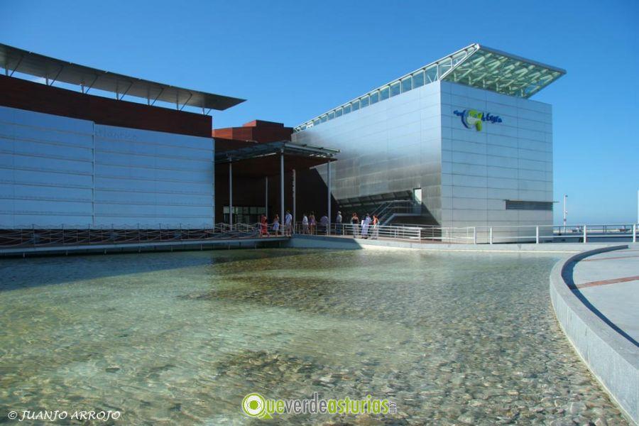 acuario de gij n en gij n xix n asturias