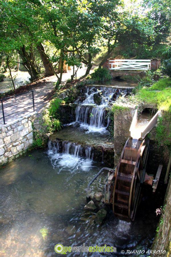 Jard n bot nico atl ntico en gij n xix n asturias for Jardin botanico en sevilla
