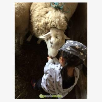 Visita a la granja