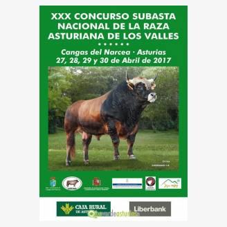 XXX Concurso subasta nacional de la Raza Asturiana de los Valles Cangas del Narcea 2017